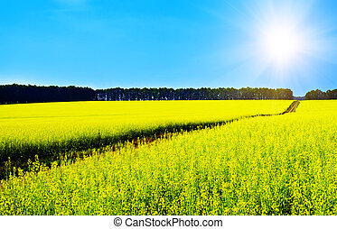 Rapeseed landscape - Landscape with rapeseed flowers and...