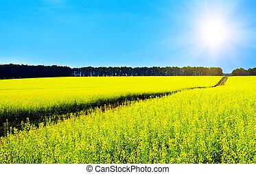rapeseed, landschaftsbild