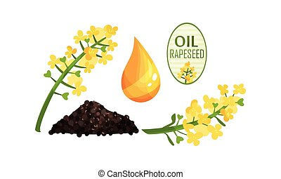 Rapeseed Plant Flower and Oil Drop Vector Set. Bright-yellow...