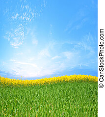 rapeseed - canola fields and green grass
