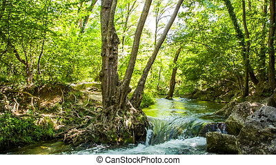 Rapid flow of the river in the forest