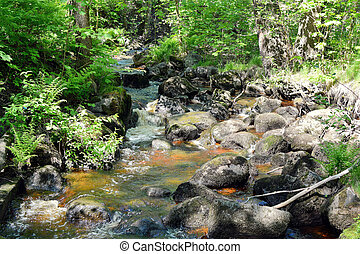 Rapid forest river