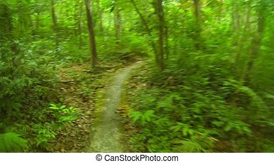 Rapid movement through the rainforest and plantations of rubber trees. Thailand, Phuket
