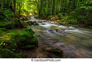 Rapid stream in green forest