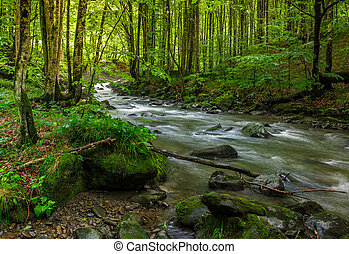 rapido, flusso, in, foresta verde