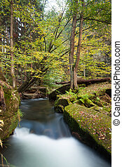 Rapids flowing along lush forest - Scenic shot of rapids ...