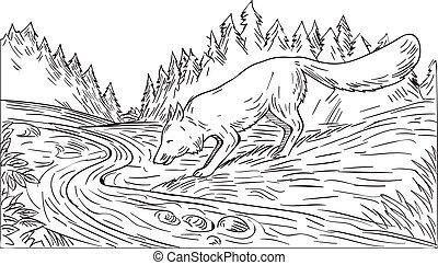 raposa branca, madeiras, pretas, bebendo, rio, desenho