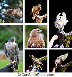 Raptor show zoo collage with photos of eagle, hawk and owl