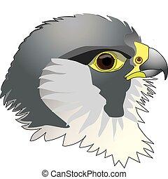 raptors - Falcon. Peregrine falcon, head.