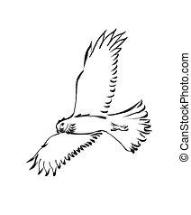 Raptors - Harrier hawk , simplified drawing.