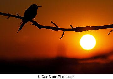rare bird silhouette at sunset