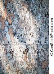 Rare texture of tree bark