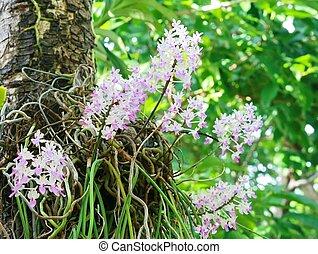 Rare wild orchids in Thailand