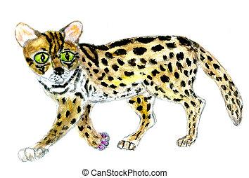 Rare wild tropic cat