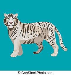 raro, aislado, blanqueado, depredador, tigre, white., animal...