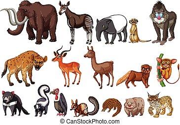 raro, animales
