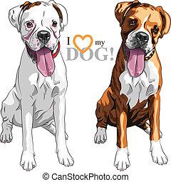 ras, vector, twee, bokser, schets, huiselijke hond