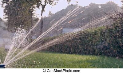 rasen, bewässerung, in, stadt