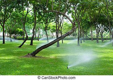 rasen, bewässerung, park, sprinkler