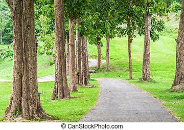 rasen, groß, bäume, park., bürgersteig, entlang