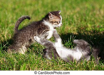 rasen, spielende , zwei, babykatzen