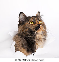 rasgado, isolado, gato, papel, branca, buraco, lado