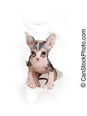rasgado, isolado, gato, papel, buraco, lado