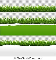 rasgado, papel, experiência verde, capim, transparente