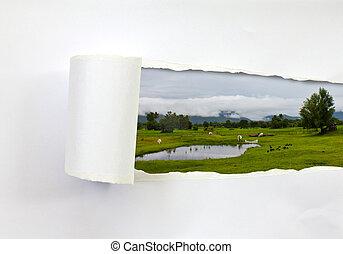 rasgado, papel, y, vacas, en, granja, (landscape)