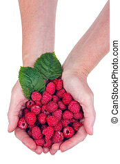 Raspberries for You