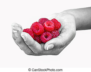 Raspberries in Girl's Hand