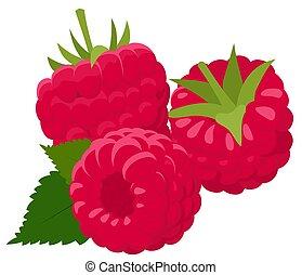 raspberries., isolé, illustration, arrière-plan., vecteur, forêt, berry., blanc, framboise