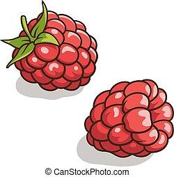 Raspberries - Vector illustration of fresh, ripe raspberries...