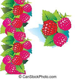 raspberry., 熟した
