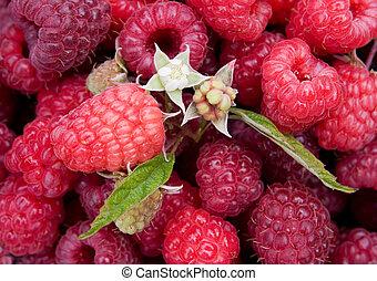 Raspberry. Background