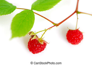 Raspberry branch white