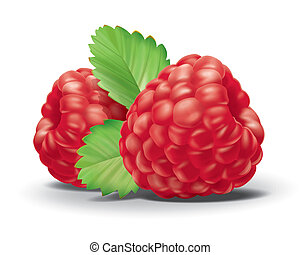 Raspberry - detailed illustration for your projects