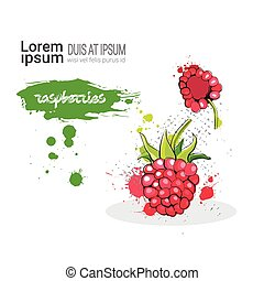 Raspberry Hand Drawn Watercolor Fruit On White Background With Copy Space