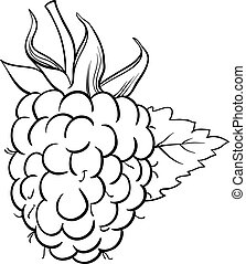 raspberry illustration for coloring book