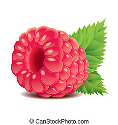 Raspberry isolated on white vector