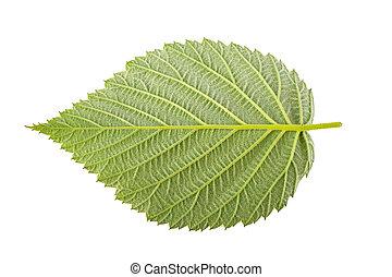 Raspberry leaves on white background
