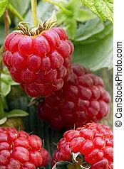Raspberry on wood background