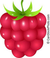 Raspberry - one ripe raspberry isolated on white