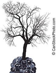 Raspberry tree of fruit mulberry