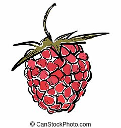 Raspberry. Vector illustration.