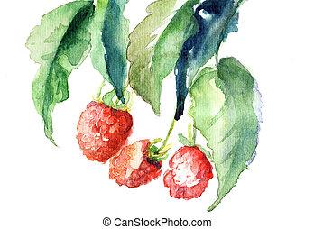 Raspberry, watercolor illustration