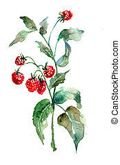 Raspberry, watercolor illustration