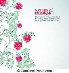 Raspberry, watercolor. Vector illustration, contains...