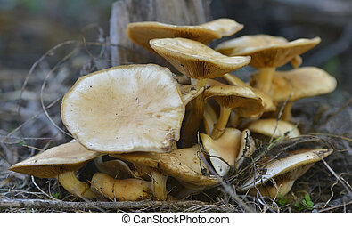 rassemblement, champignon, photo., poisonous., photo, mushroom., champignons, grass., forêt, champignon, mushrooms., non-edible