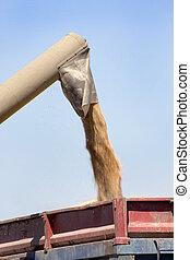 rassemblement, grain